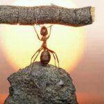 Cuando Dios te hace fuerte